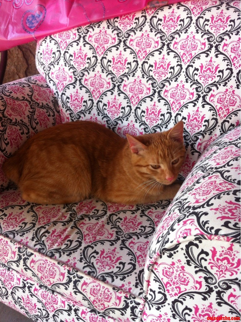 Kitty Stole A Seat