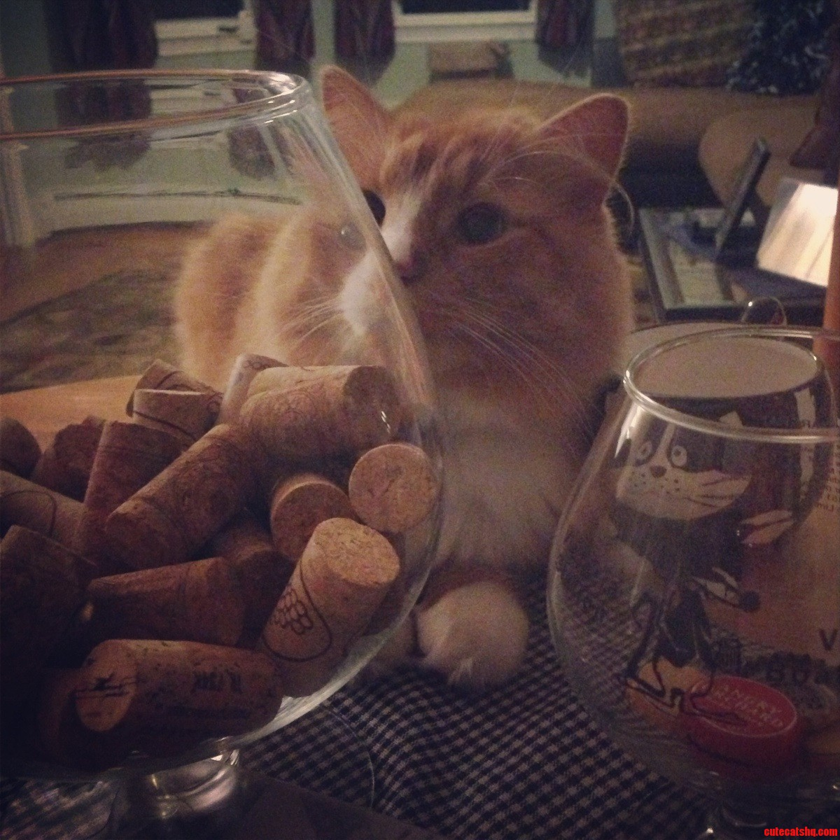 Leonards Back At It With The Wine Corks Again… Waiting. Plotting…