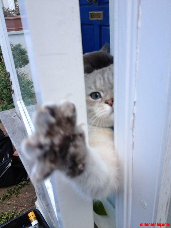 Let Me Out  I Want To Garden Too