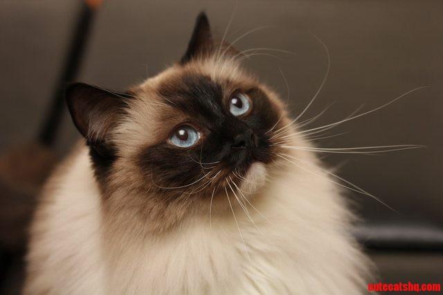 Meet My Cat  Sonya – First Post