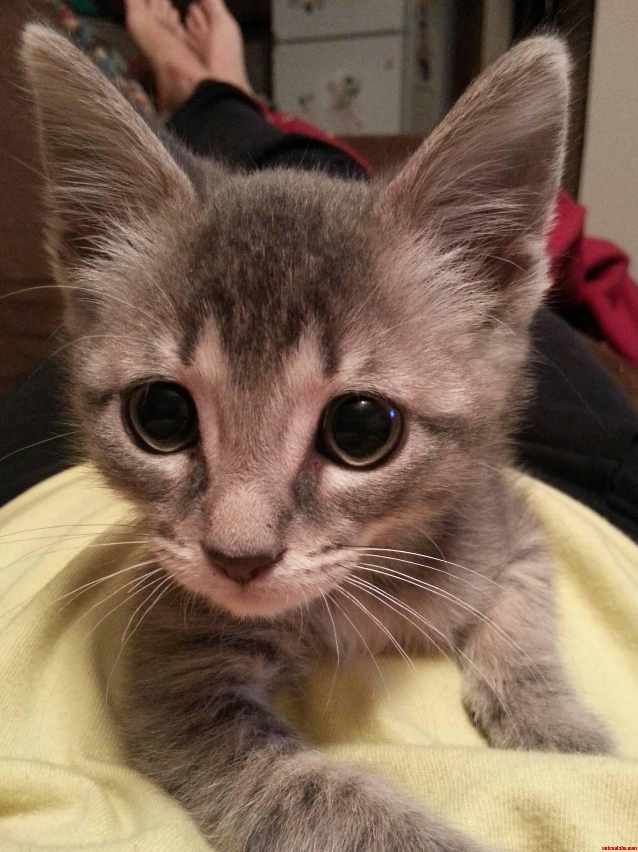 Meet Sheldon.