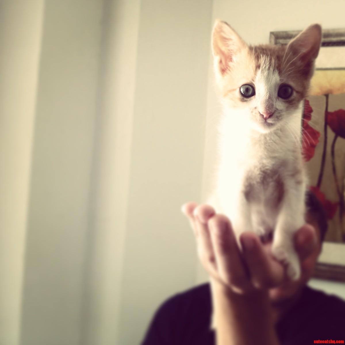 Meet Toshi