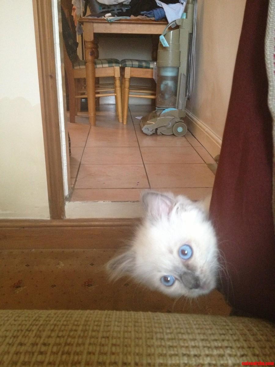 Meet my cat Kester