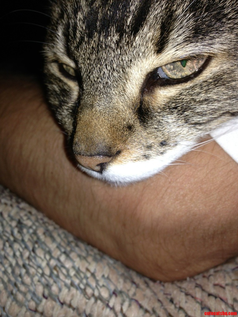 My 20 Year Old Also Likes Arm Pillows.