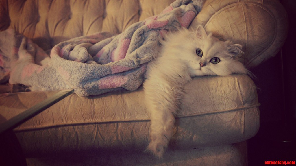My Cat Casper Watching Tv Like A Human