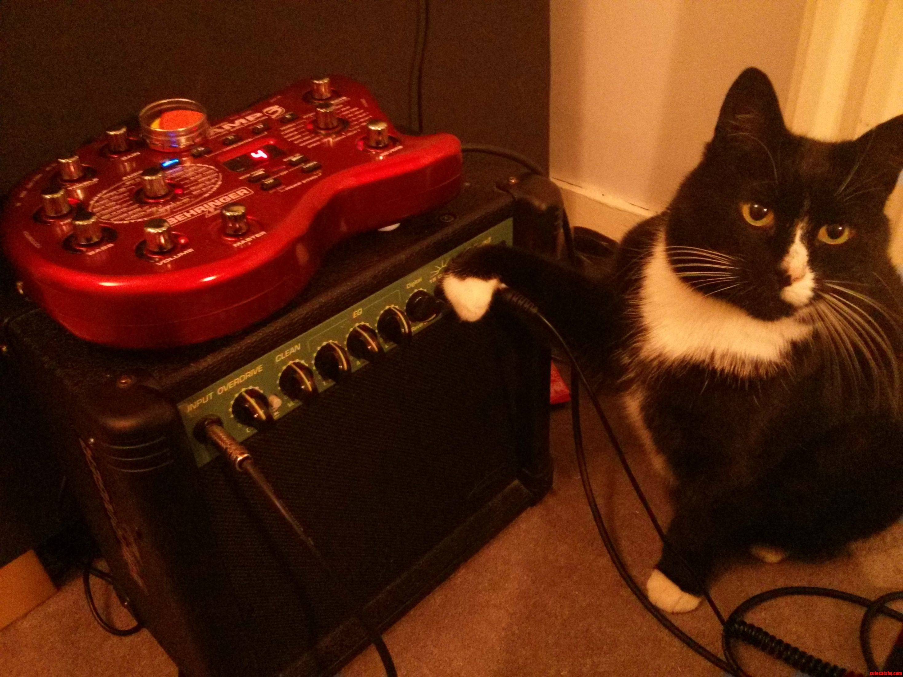My Cat Doubles As My Guitar Tech