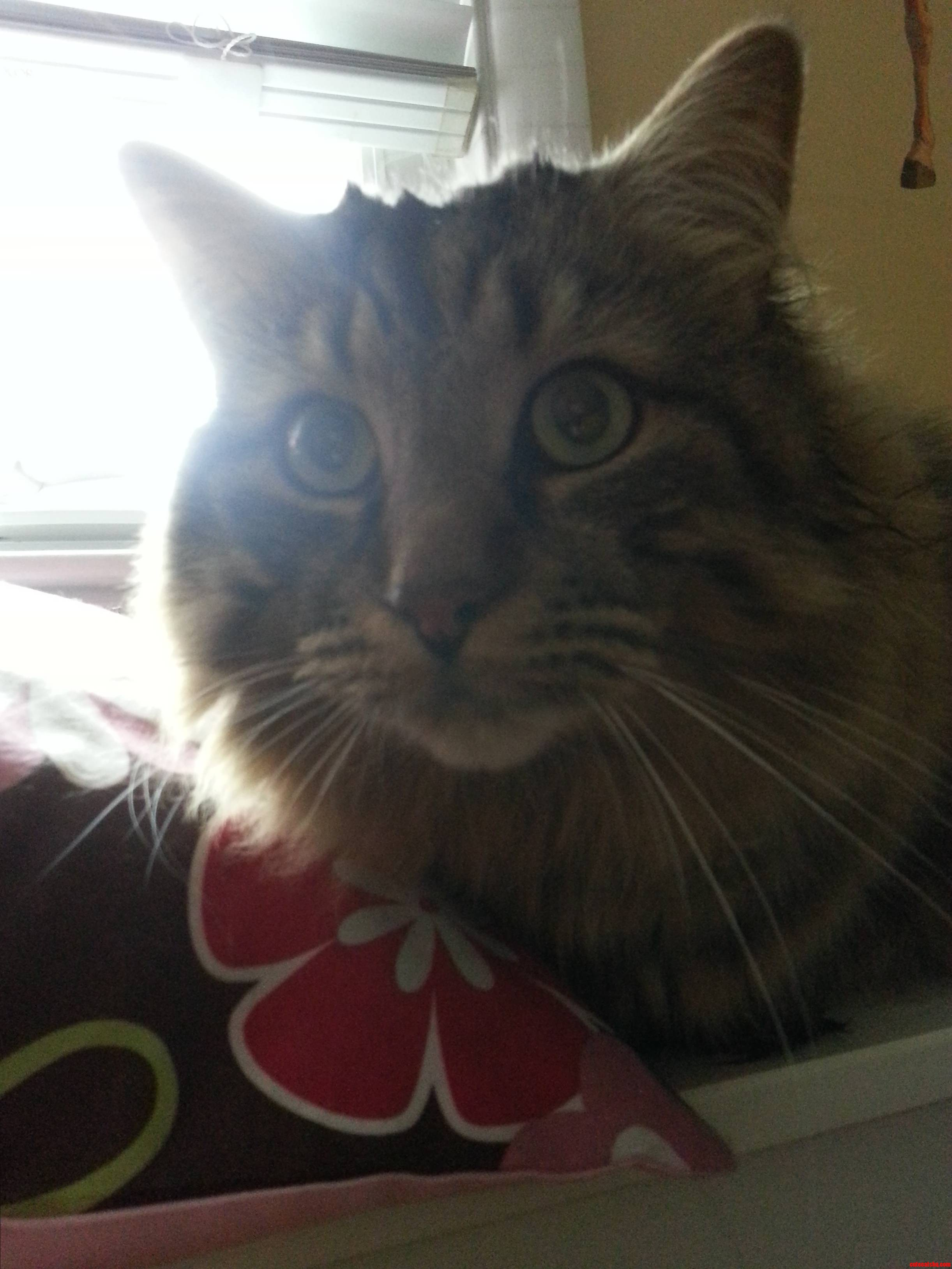 My Cat Rascal