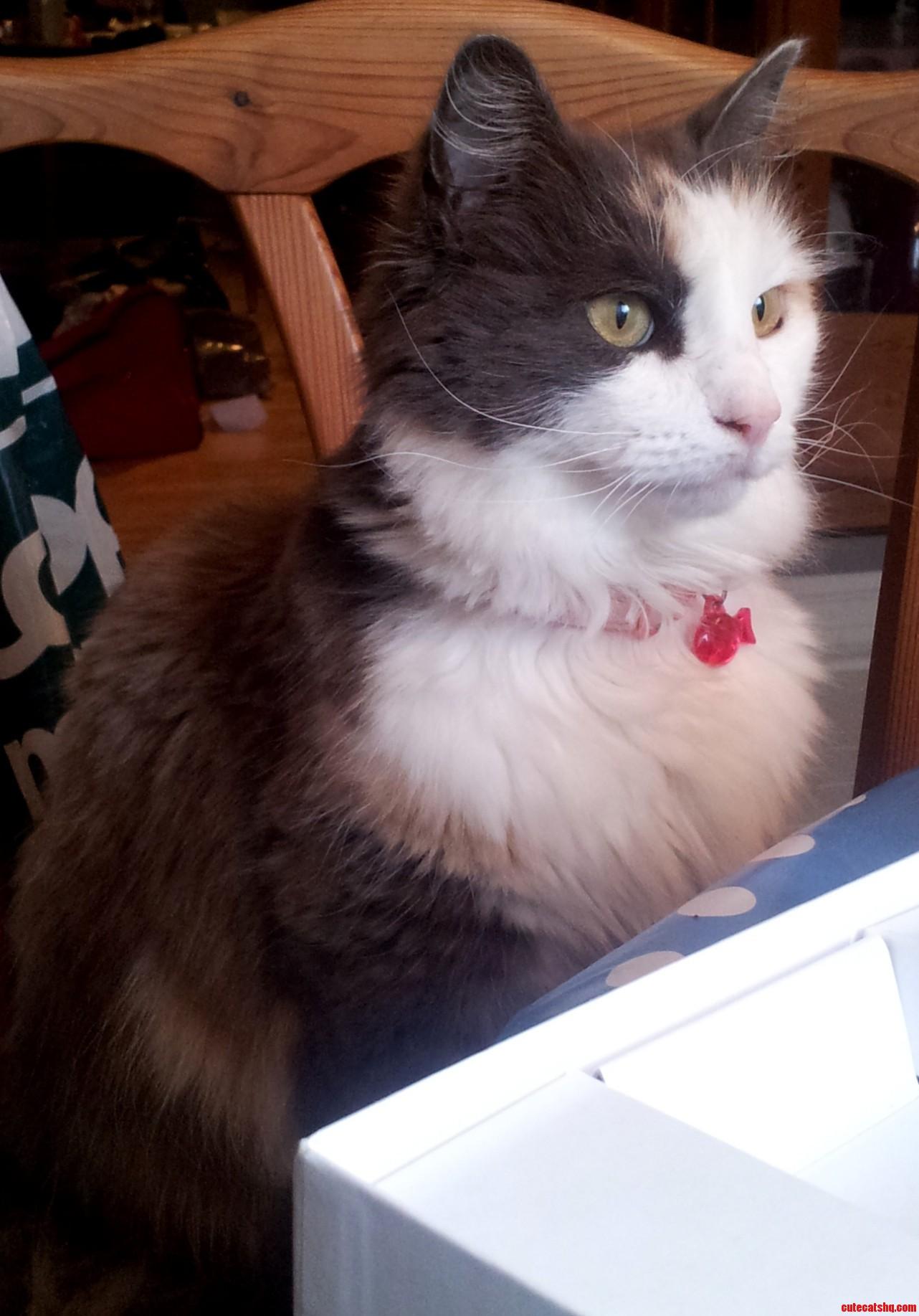 My Cutie  Lucy
