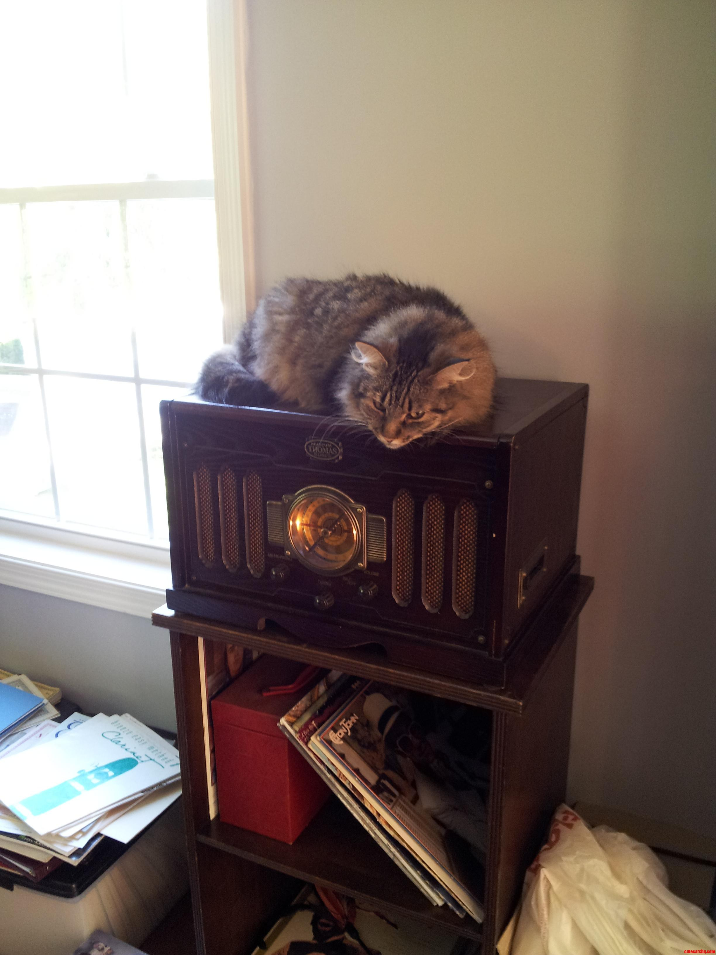 My Deaf Cat Likes To Listen To The Radio.