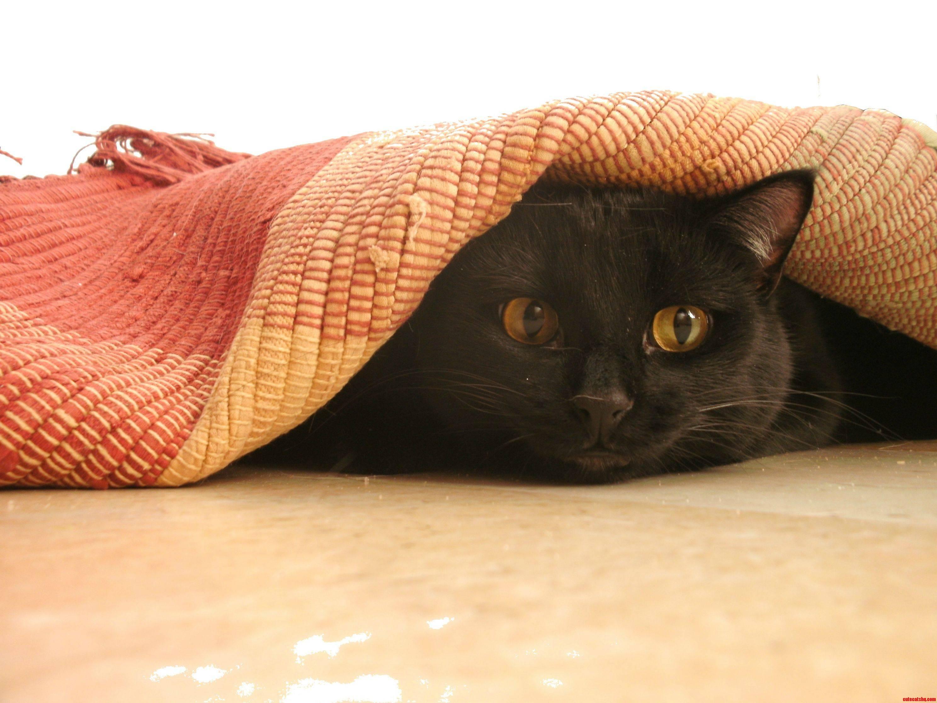 My Exs Cat  Zinfandel. He Always Thought He Was Sneaky Hiding Under Rugs.