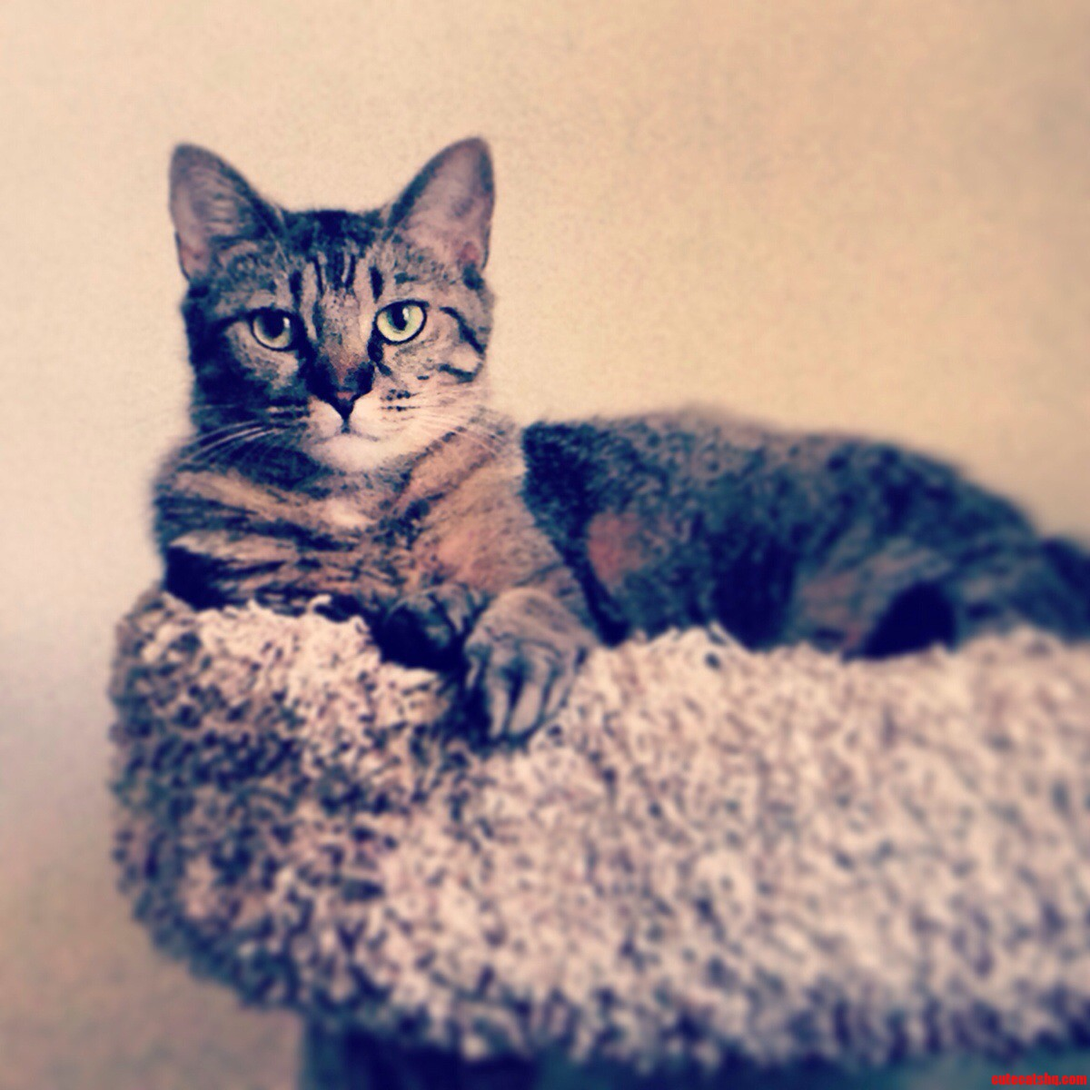 My Rescue Kitty Mila