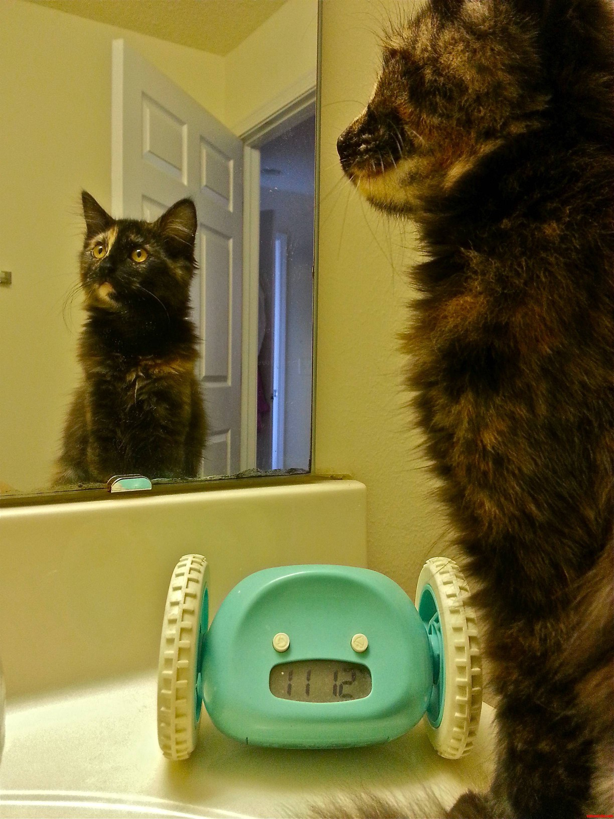 My Sweet 4 Month Old Kitten Mona Has Just Discovered The Magic Of Mirrors.
