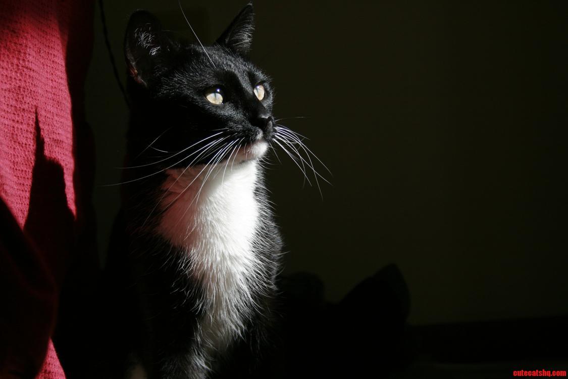 My Tuxedo Cat Prince Basking In The Evening Sun.