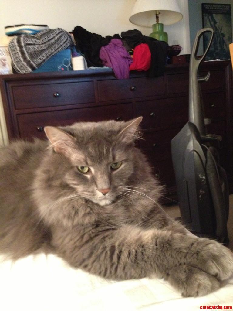 My Very Fluffy Aristocat