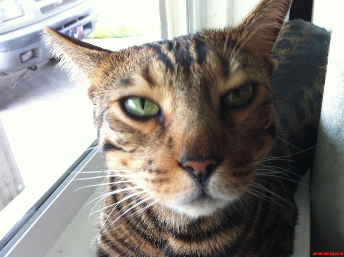 My kitty Boris
