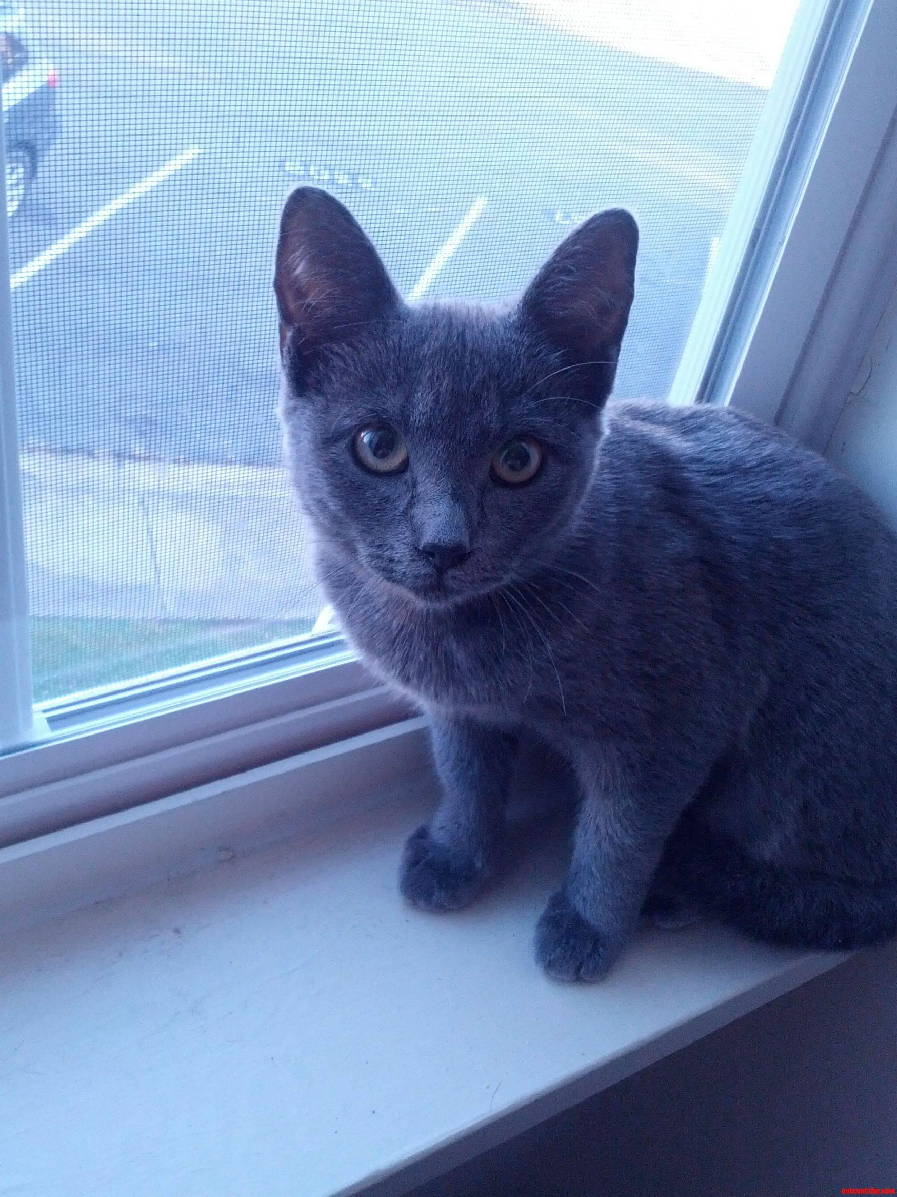Our New Kitten Alphonse He Is A Big Fan Of The Windowsill