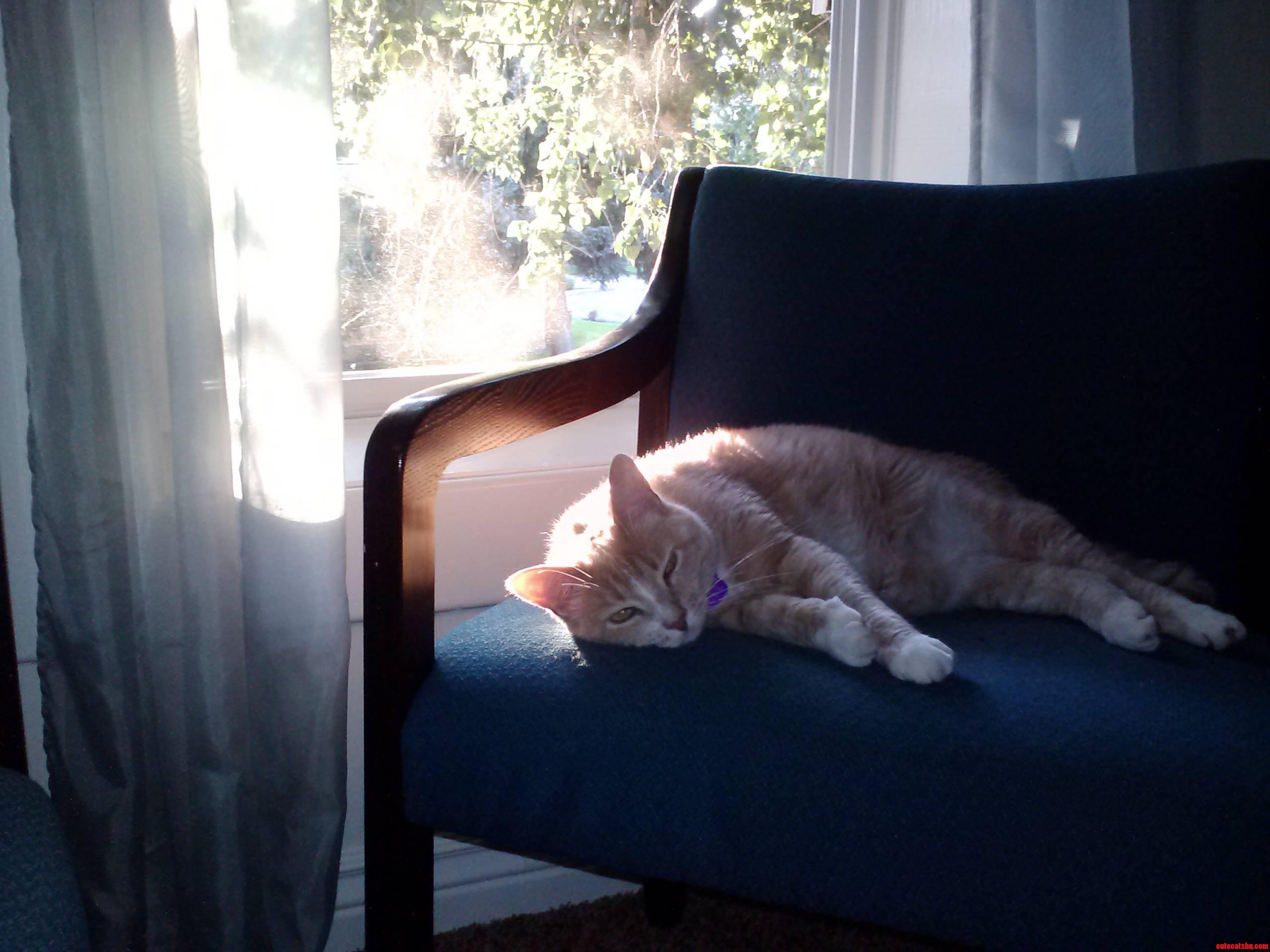 Reddit Heres My Cat Sun Bathing