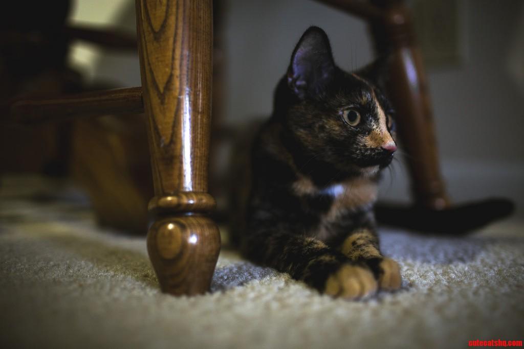 Sadie Likes To Sit Under Chairs.