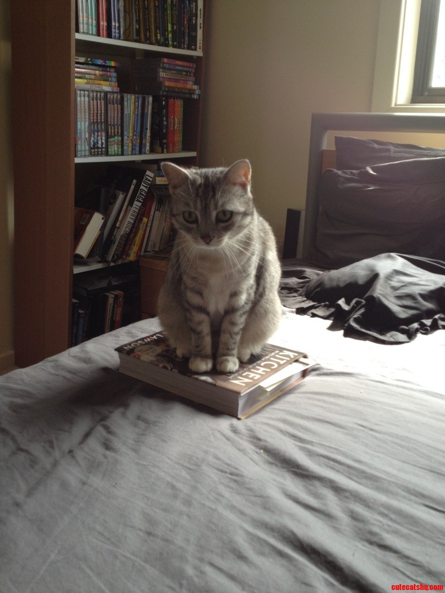 She Clearly Doesnt Like The Attention I Was Giving The Book Over Her.
