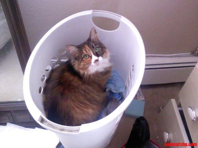 She Looks Guilty… Haha