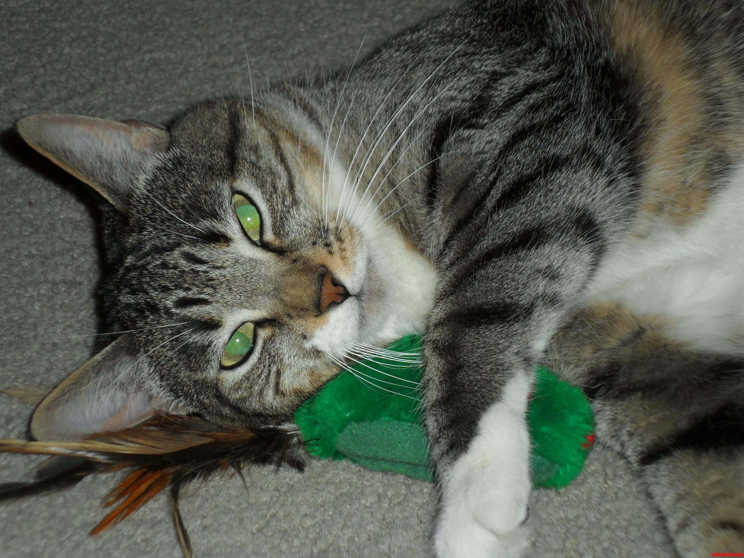 Sox Loves Her Mouse