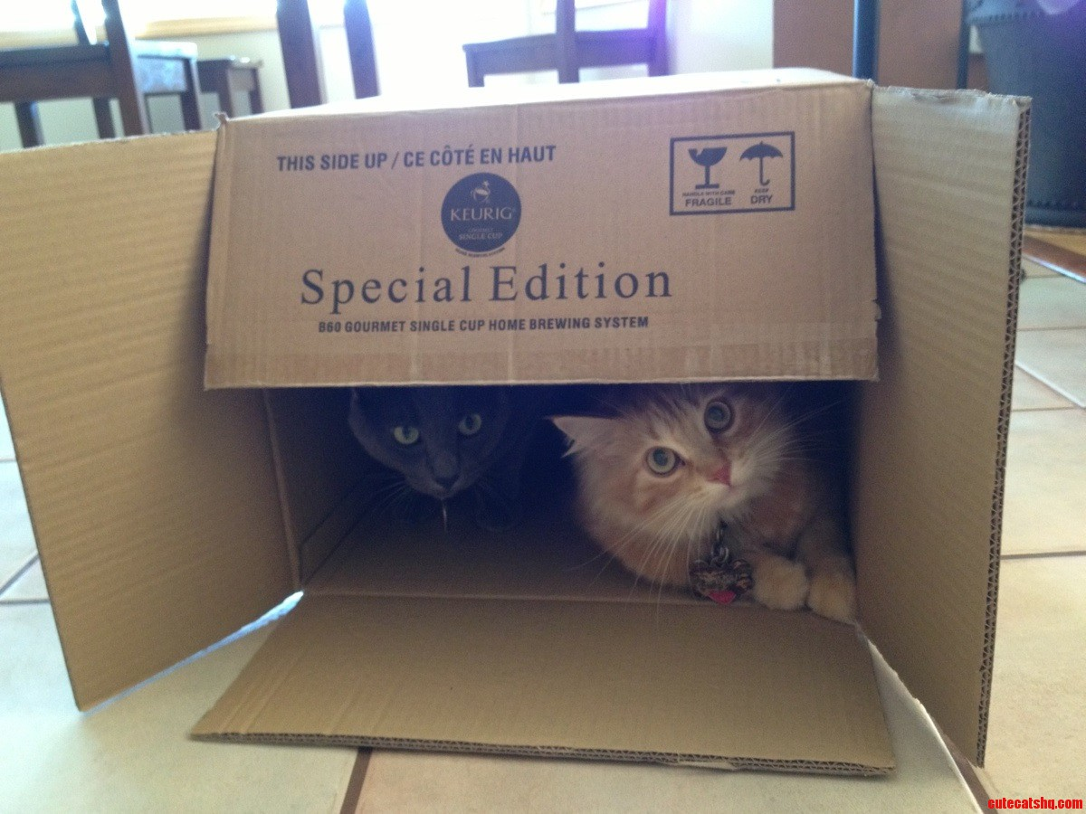 Special Edition Cat