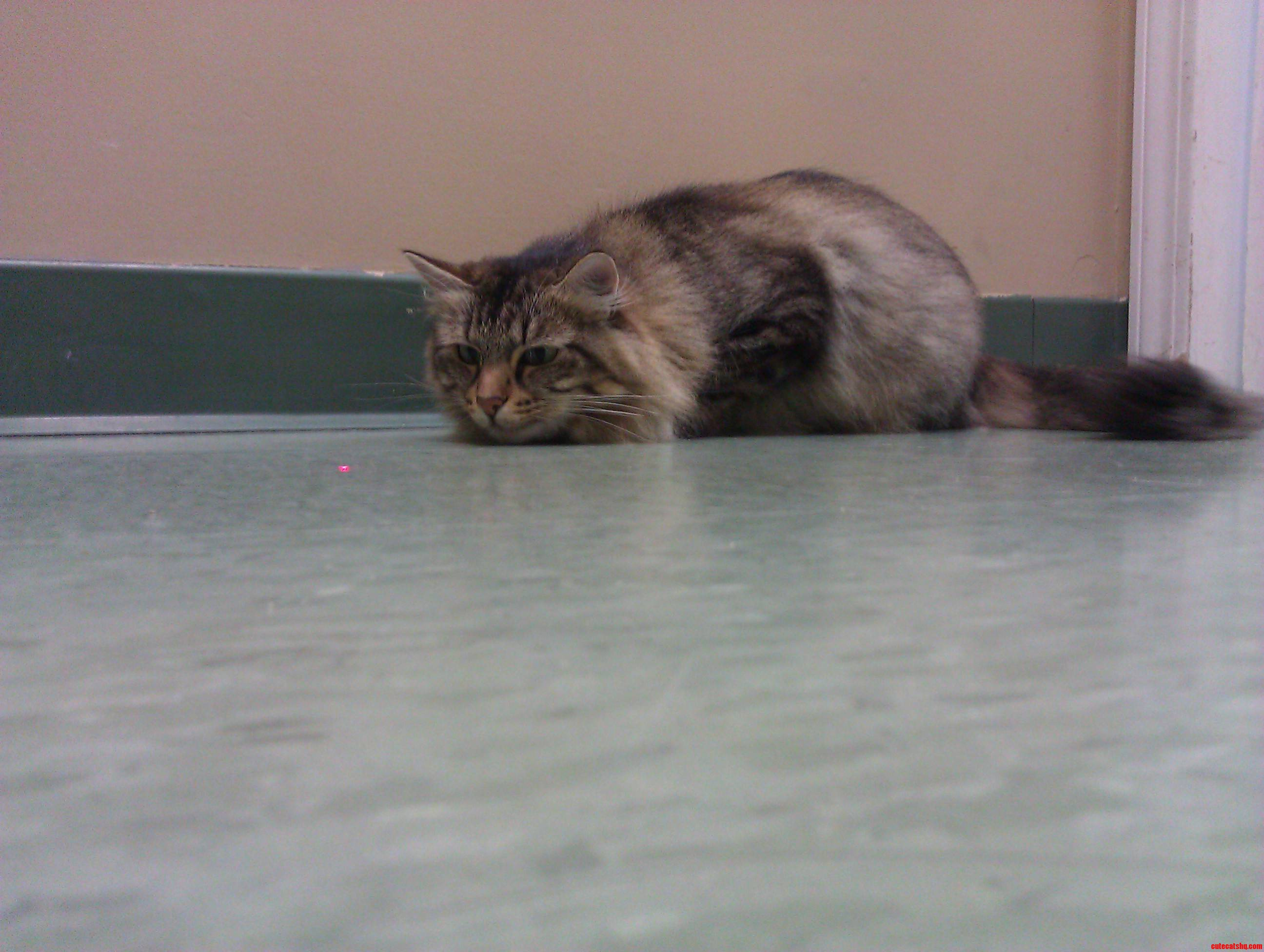 Susie Q  At A Local Cat Shelter.
