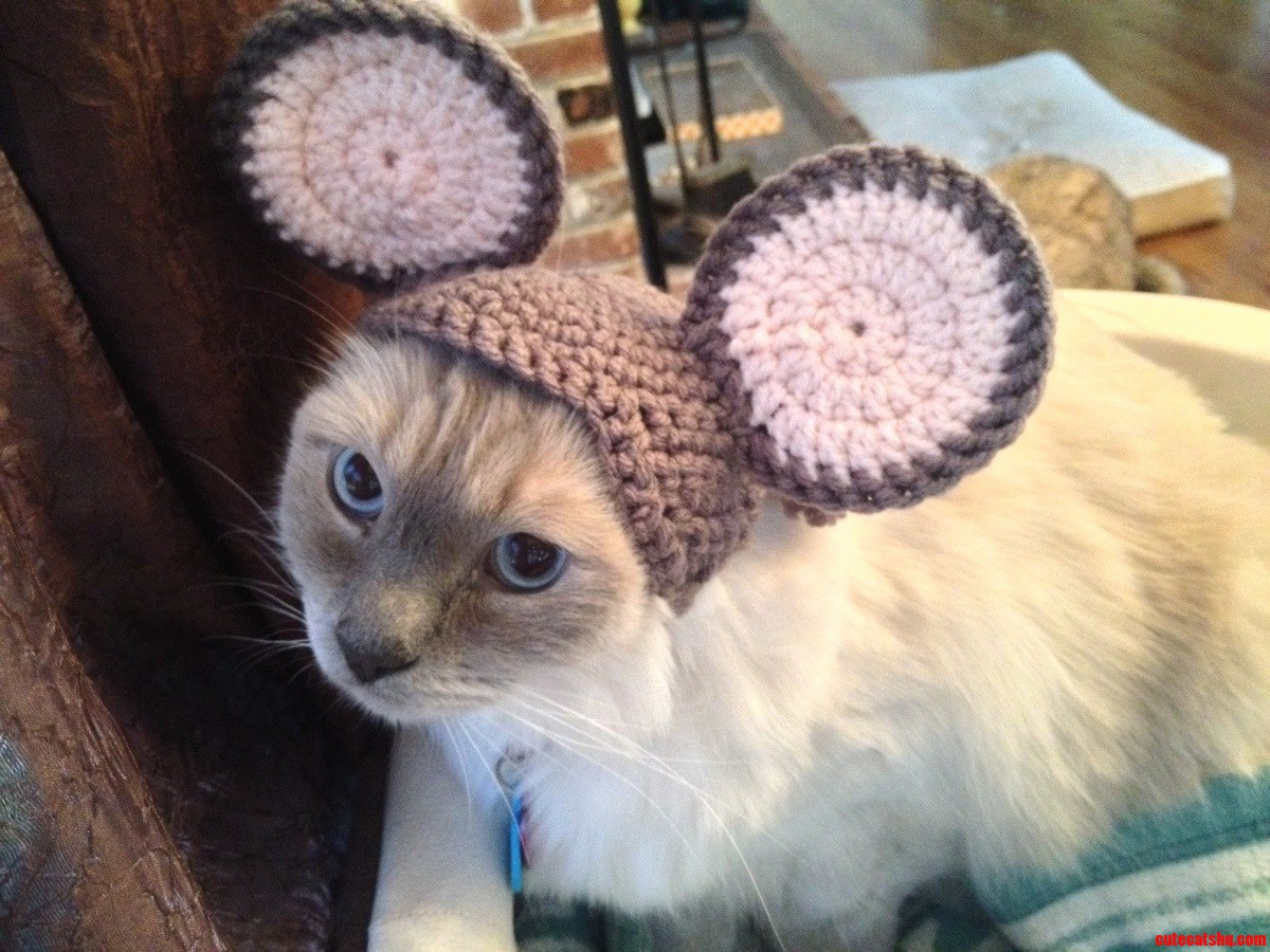 Talented Friend Of Mine Made My Fatty Gadgie An Amazing Mouse Hat  .