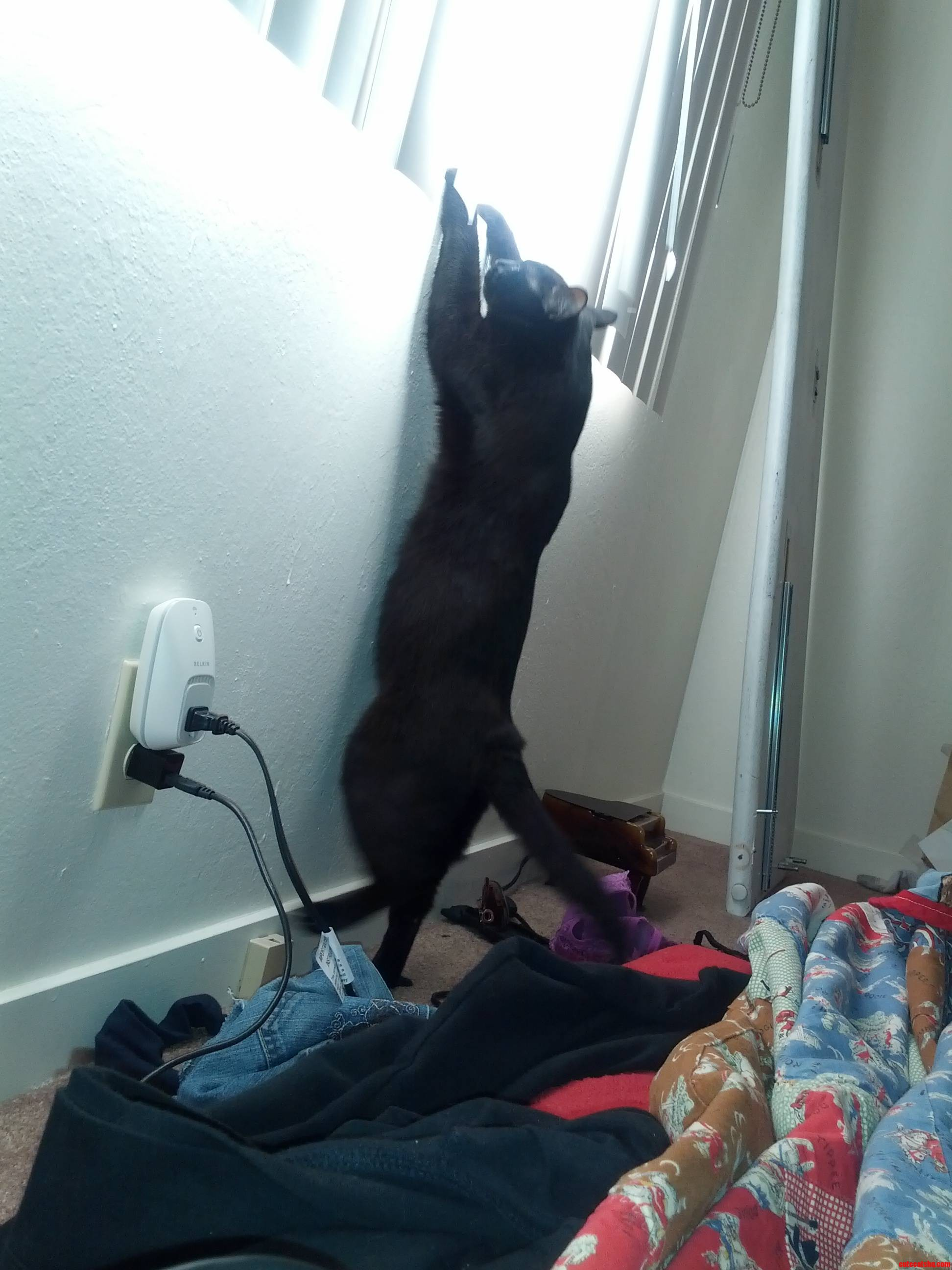 The Blinds Make A Loud Noise When He Tries To Jump Up  So He Wont Do It Unless We Pull Them Aside For Him.