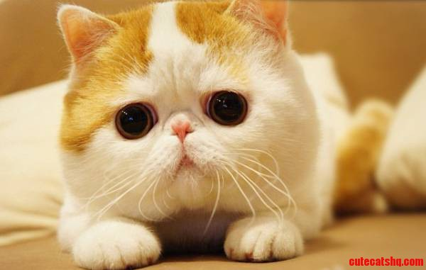 The Cutest Cat I Could Find