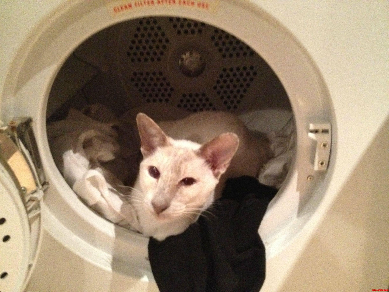 The Dryer Is Soooo Warm