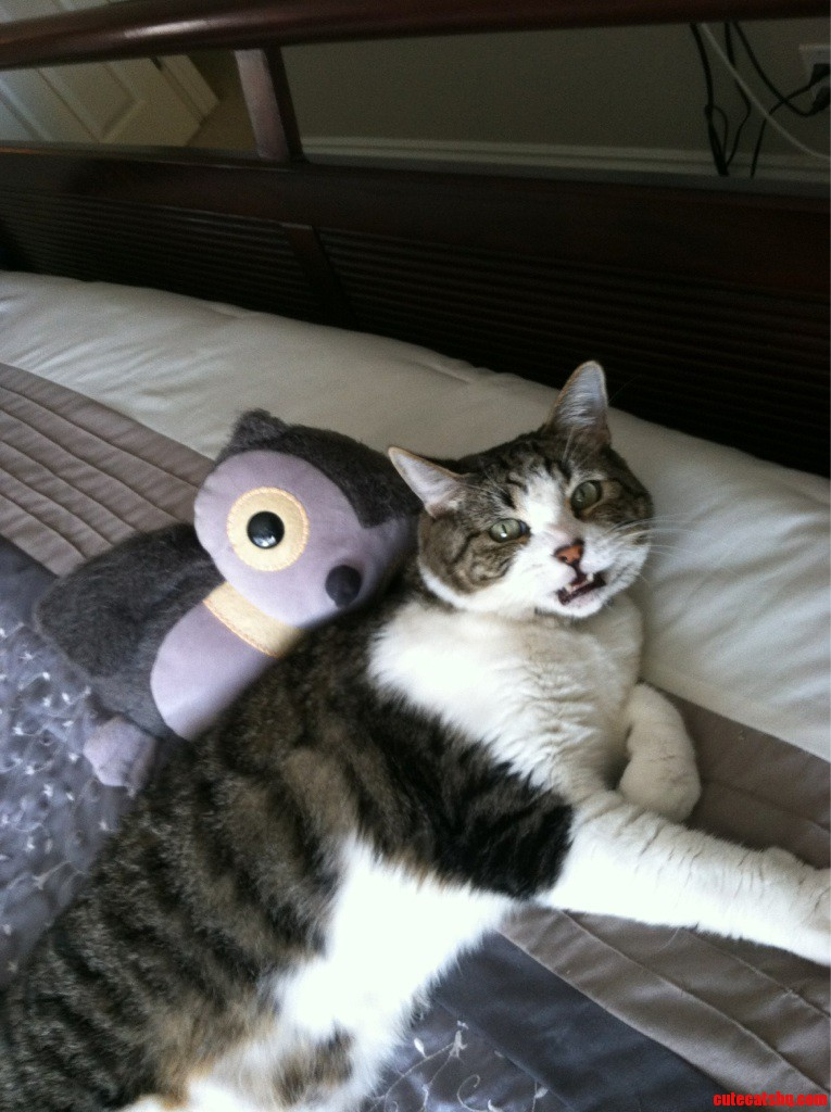 This Is Jasper  He Doesnt Like Mr.Owl Too Much
