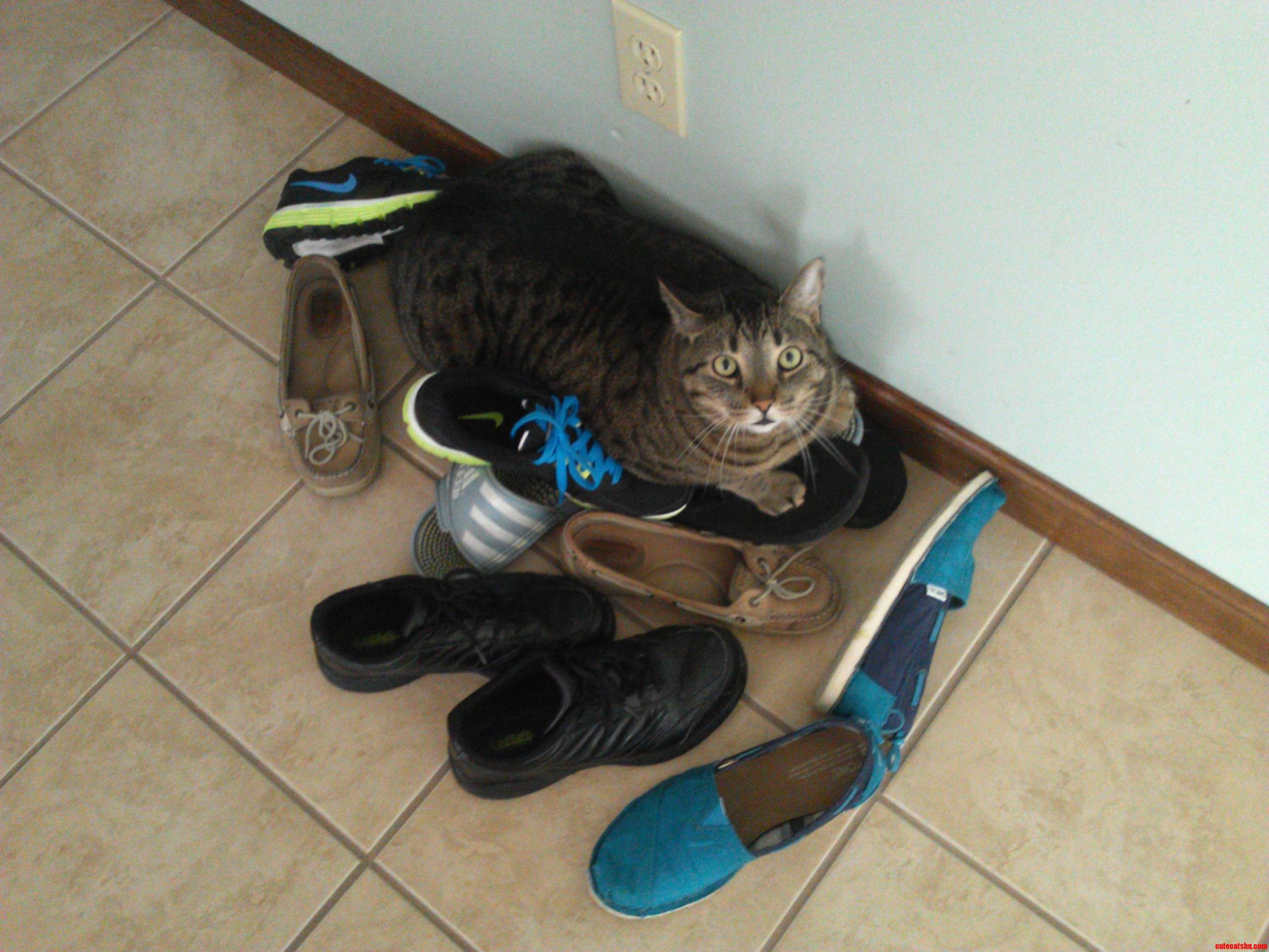 This Is Louie  And He Is A Shoe Hoarder.