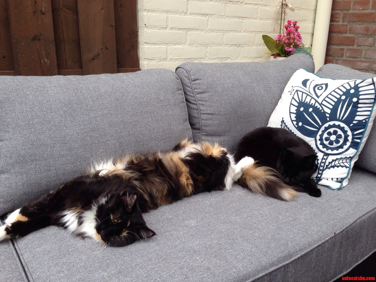 This Is The Difference Between Maine Coons And Normal Cats.