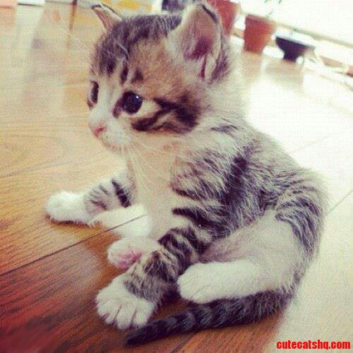 This Kitten Is Super Super Cute | Cute cats HQ - Pictures ...