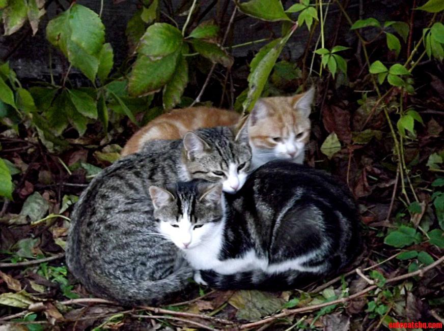 Three Cute Kittens I Saw Last Summer