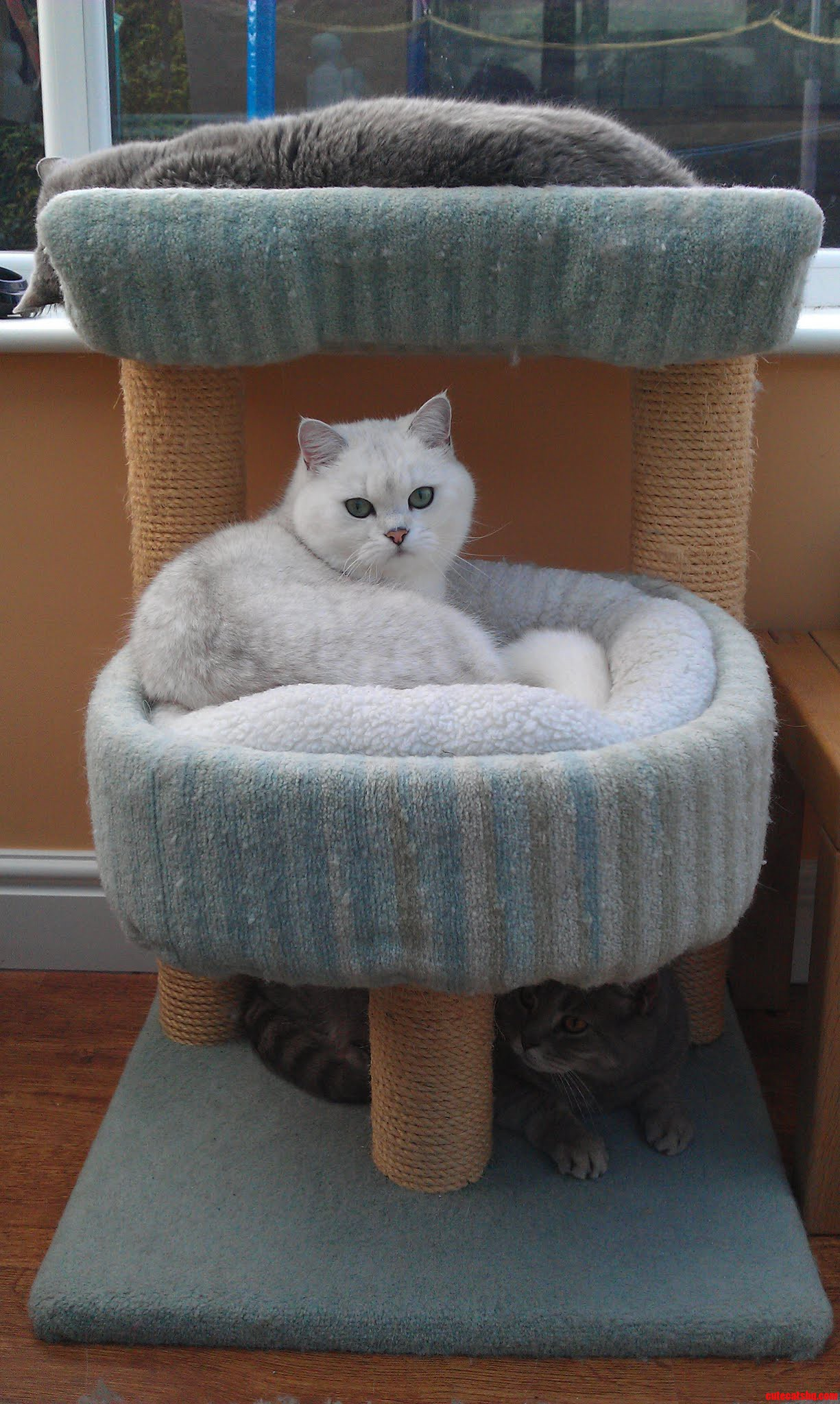 Three Layers Of Cat.