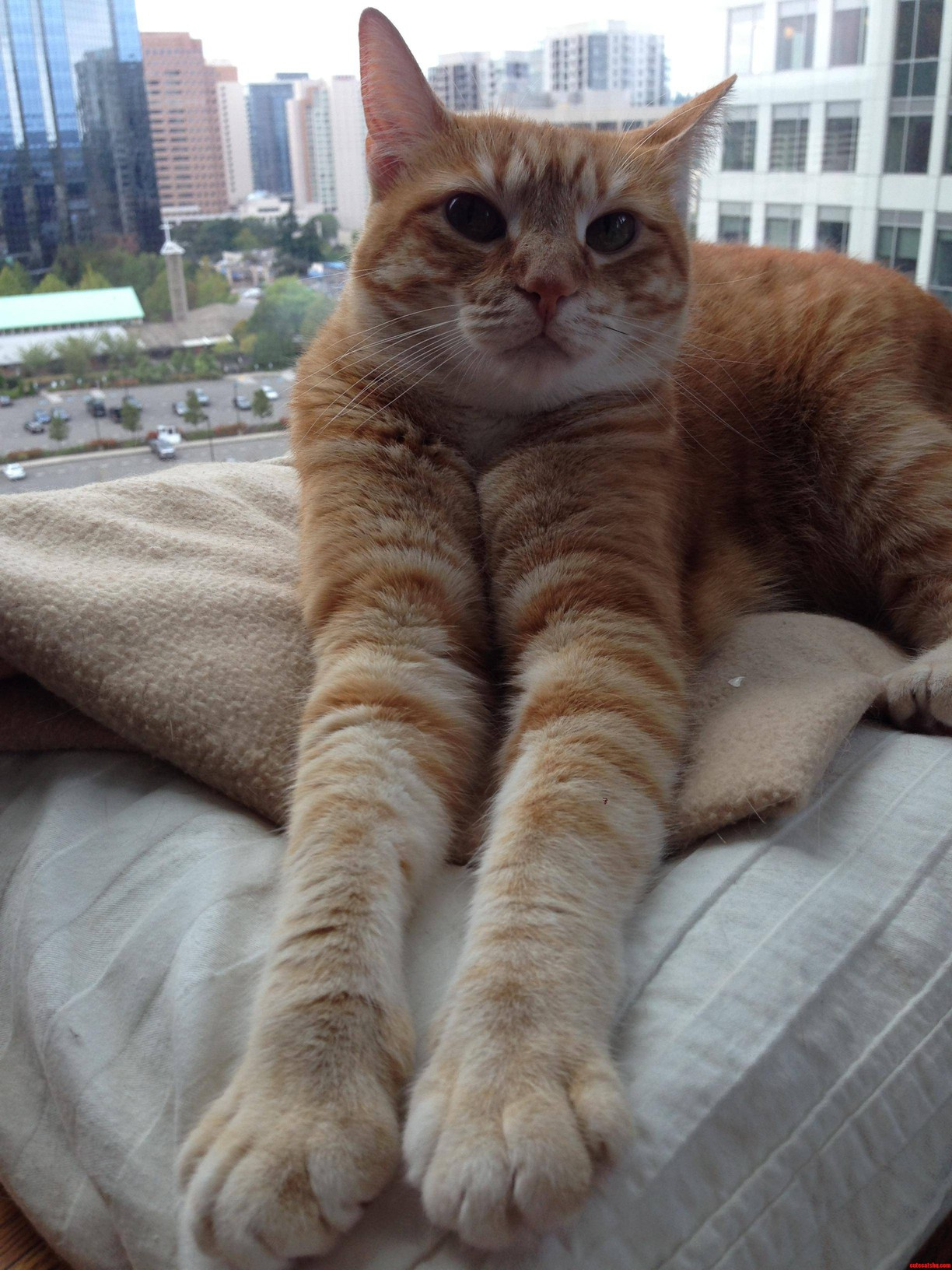 Tigger Just Streeeeetching Out For A Nice Nap…