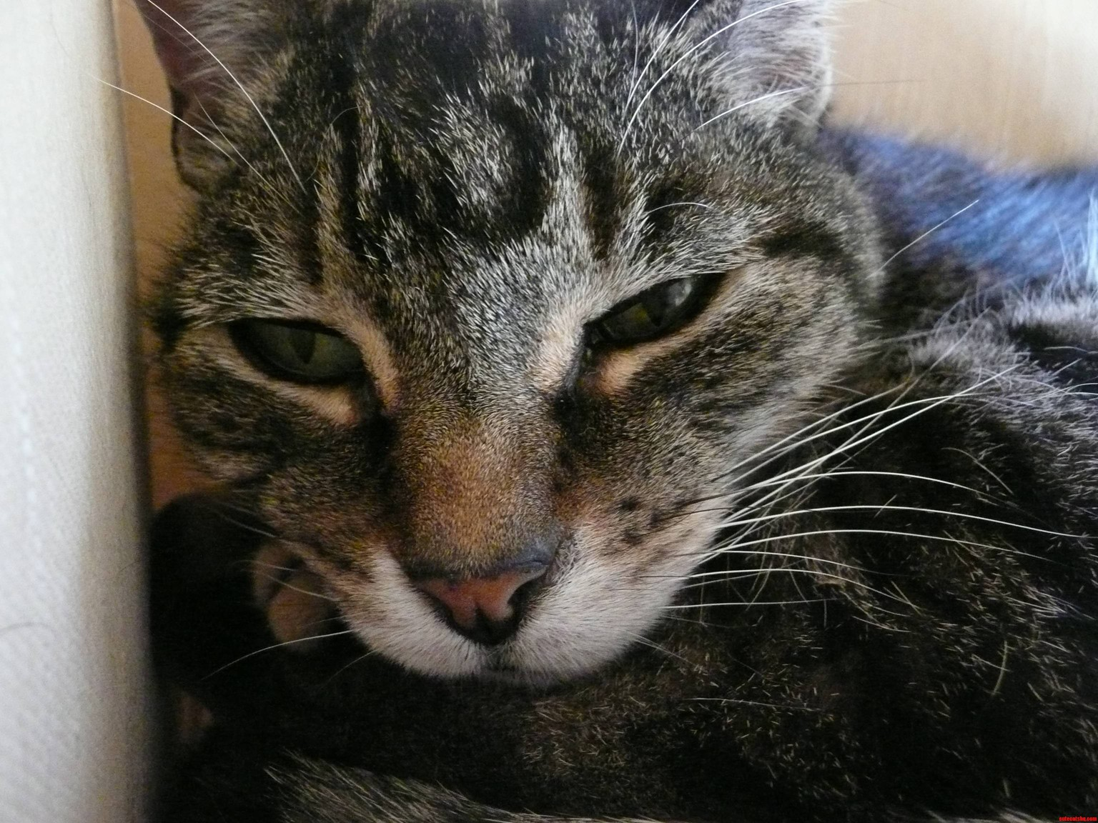 Today Is Puddys 17Th Birthday Shes Thrilled.