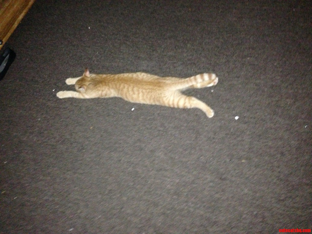 Vacuumed The Floor.. Then He Laid Like This For 3 Hours.