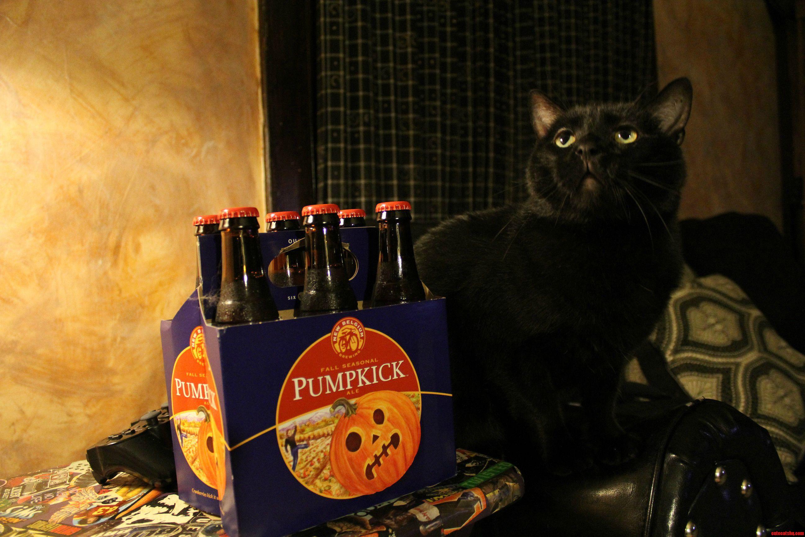 Wylde Next To Pumpkick New Belgium Fall Seasonal Ale