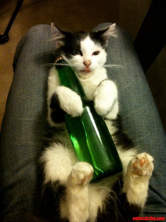 Beer Kitty