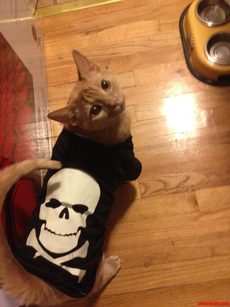 Booooo Im A Spooky Skeleton He Hates His New T-Shirt