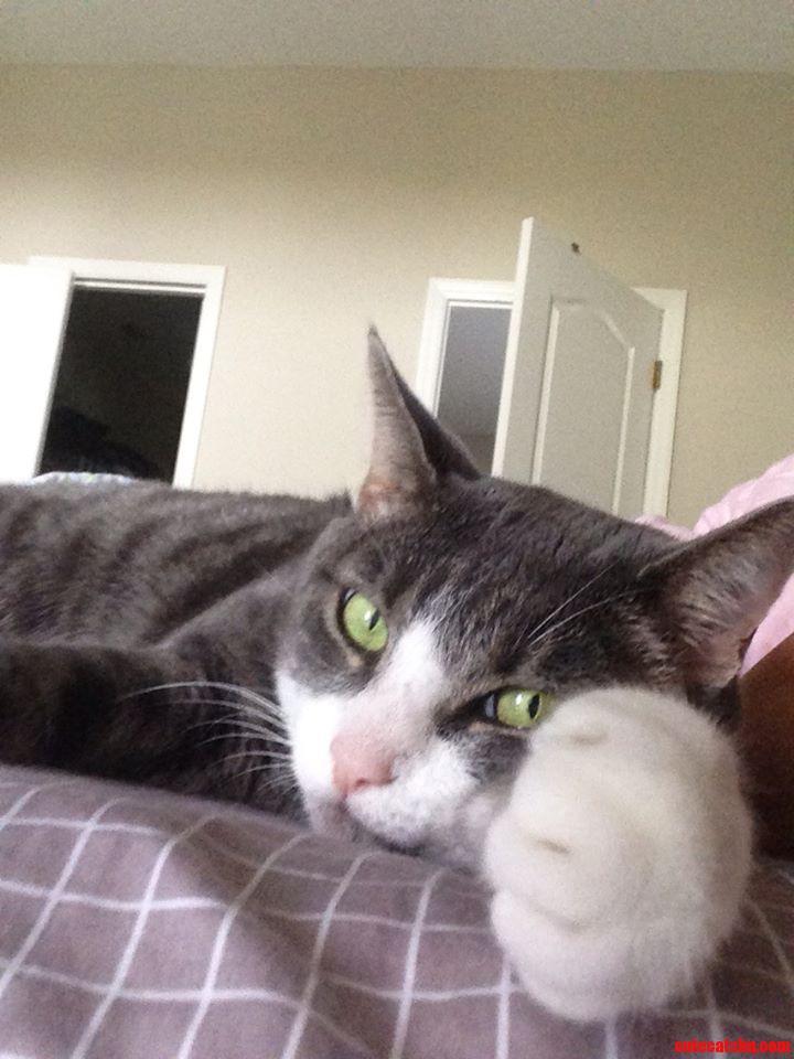 Cat Fist
