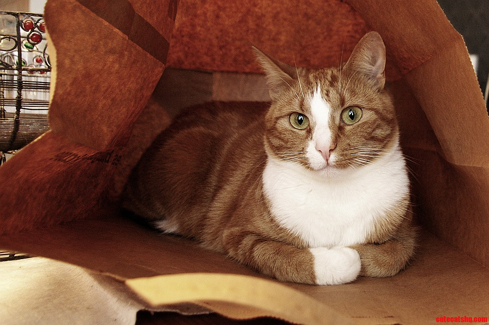 Cat In A Paper Bag.
