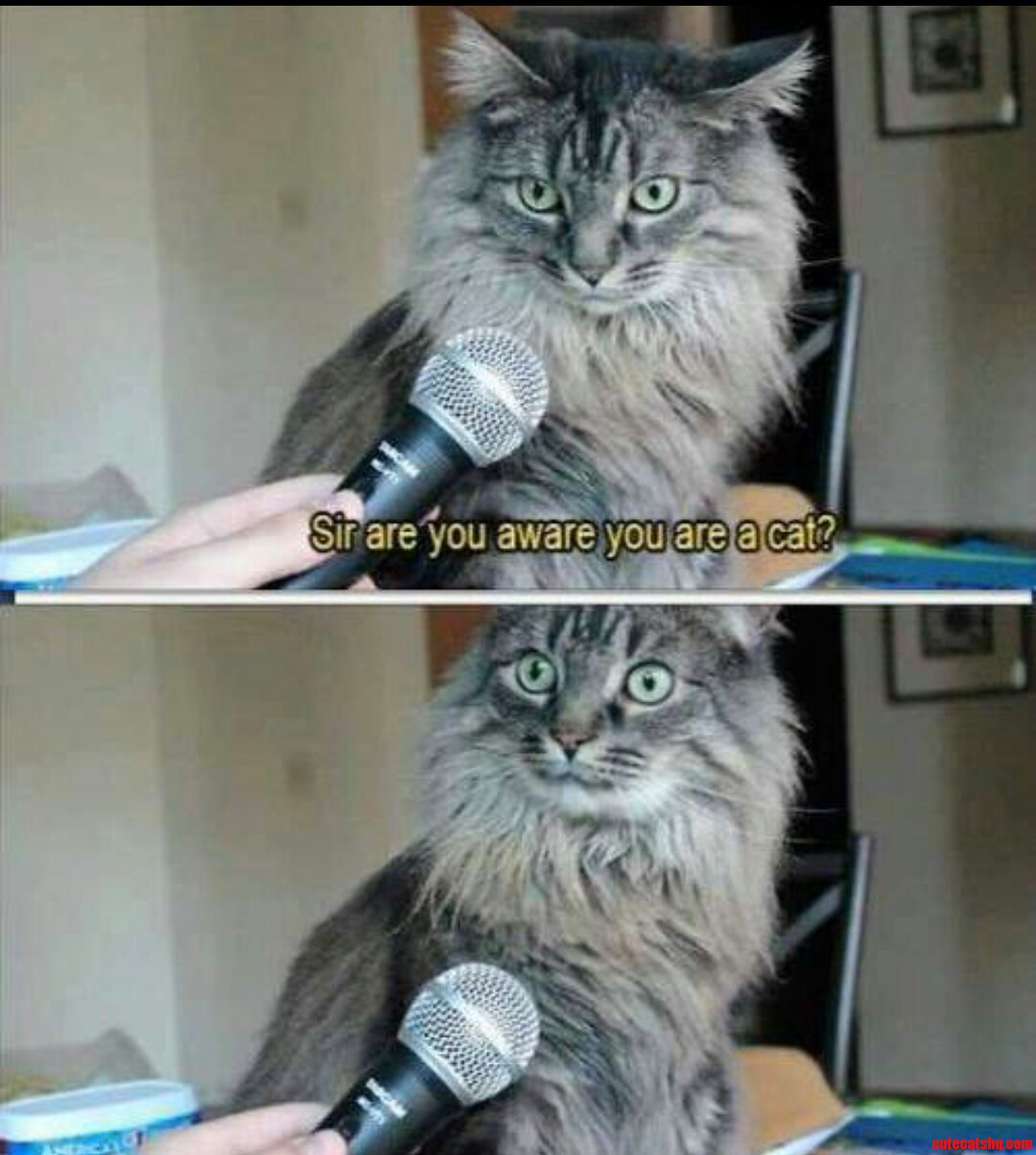 Cat Interview Gone Wrong