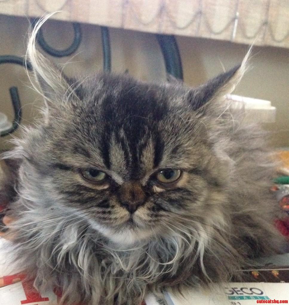 Grumpy Cat In The Making.