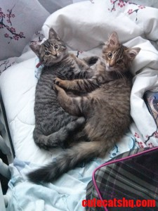 I Was Previously Opposed To Cats. Then My Sister Got Two Kittens... They Just Hit 10 Weeks.