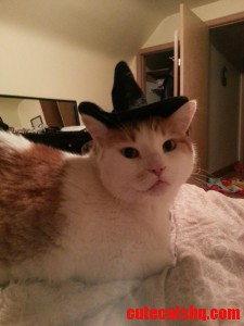 Just Getting My Kitty Ready For His Birthdayhalloween ...