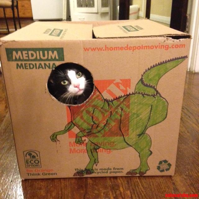 Meet My 1 Year Old Dino-Cat Bruiser